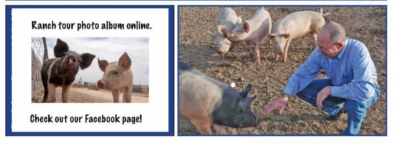 Mike Callicrate interviewed about health of pigs