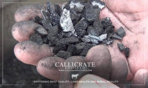 Carbon-rich black gold, a natural soil enhancer
